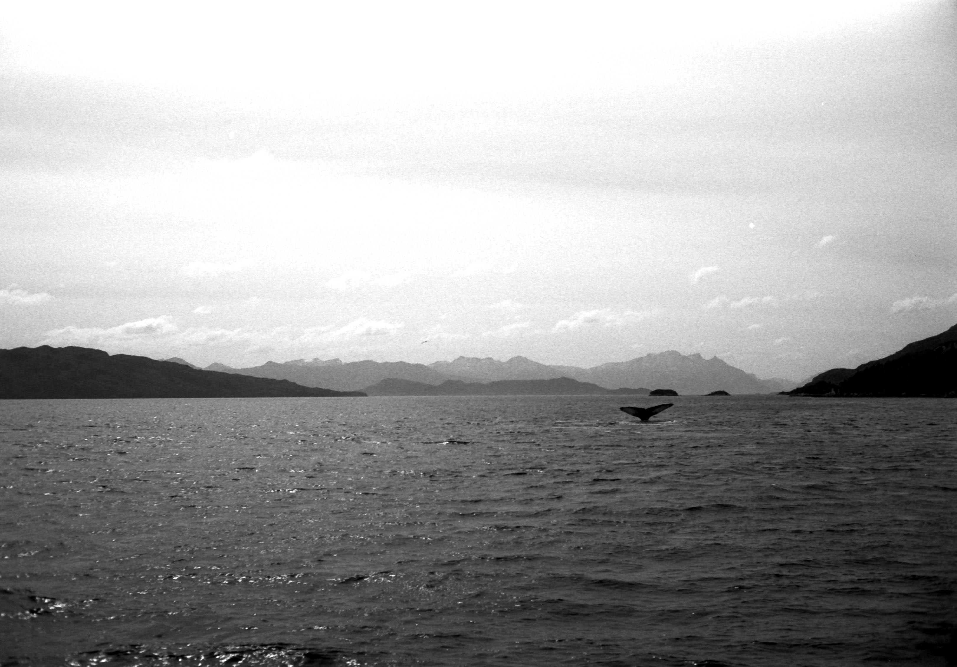 The Hunchback · Strait of Magellan