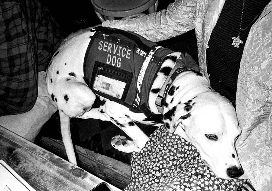 Service Dog · Rome